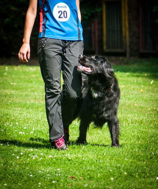 How A Dog Obedience School Changed My Life